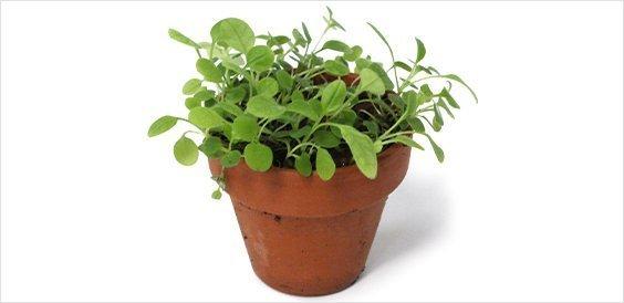 Verplanten