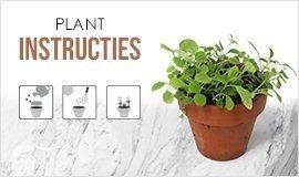 plant-instructies